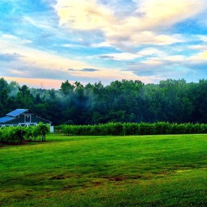 Rocky River Vineyard